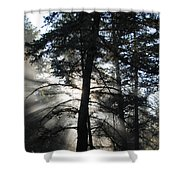 Northwoods Morning Shower Curtain