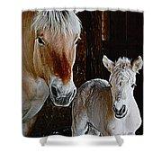 Norwegian Fjord Horse And Colt Digital Art Shower Curtain