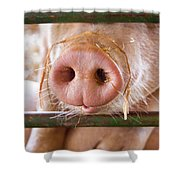 Nosey Shower Curtain