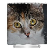 Nosey Lil Kitty Shower Curtain