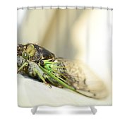 Not A Cute Bug Shower Curtain
