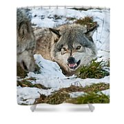 Not Any Closer Shower Curtain