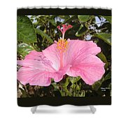 Soothes Your Soul -  Aroma Touch Shower Curtain