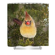 Not-so-angry Bird Shower Curtain