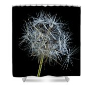 Not So Perfect Dandelion Shower Curtain