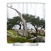 Not The Ghost Tree Shower Curtain