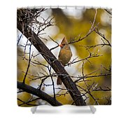 November Cardinal Shower Curtain