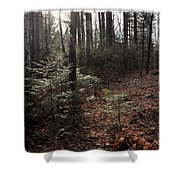 November In The Pines Shower Curtain