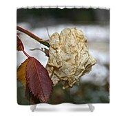 November Snow Rose Shower Curtain