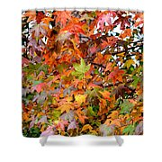 November's Maples Shower Curtain