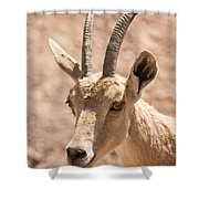 Nubian Ibex Capra Ibex Nubiana 1 Shower Curtain