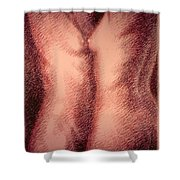 Nude Female Torso Drawings 1 Shower Curtain