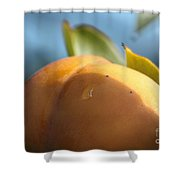Nude Persimmon Shower Curtain