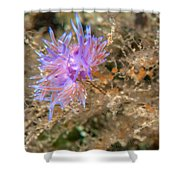 Nudibranch 2 Shower Curtain