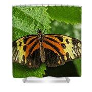 Numata Longwing Butterfly Shower Curtain