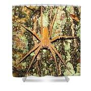 Nursery Web Spider Shower Curtain