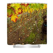 Nute Watches The Vines Shower Curtain by Jean Noren