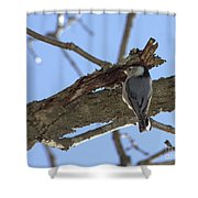 Nuthatch Getting To The Good Stuff Shower Curtain