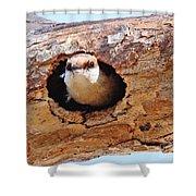 Nuthatch Bird In Nest Shower Curtain