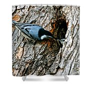 Nuthatch Love Shower Curtain