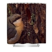 Nuthatch Up Close Shower Curtain