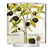 Nutmeg Plant Botanical Shower Curtain