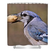 Nutty Bluejay Shower Curtain