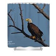 Nw Florida Bald Eagle Iv Shower Curtain