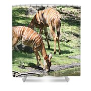 Nyalas At The Watering Hole Shower Curtain
