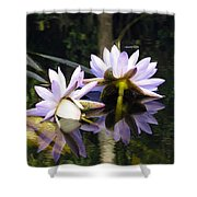 Nymphaea Colorata. Water Lilies Shower Curtain