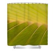 'o Ke Aka Ka 'oukou Shower Curtain
