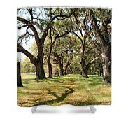 Oak Allee At Roseland Plantation  Shower Curtain