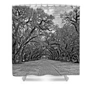 Oak Alley 3 Monochrome Shower Curtain