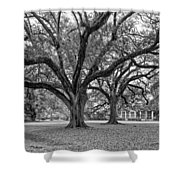 Oak Alley Grounds Bw Shower Curtain