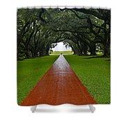 Oak Alley Path Shower Curtain