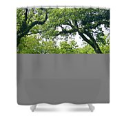 Oak Alley Trees Shower Curtain