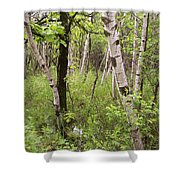 Oak And Birch Shower Curtain