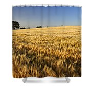 Oak At The Field Shower Curtain