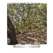 Oak Forest - The Magical And Mysterious Trees Of The Los Osos Oak Reserve Shower Curtain