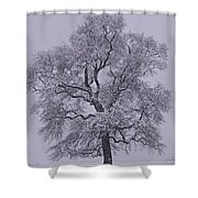 Oak In Snow Shower Curtain by Don Perino