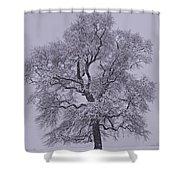Oak In Snow Shower Curtain
