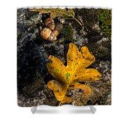 Oak Leaf And Acorn In Autumn Shower Curtain