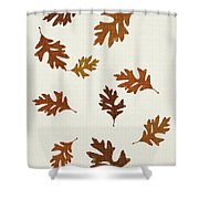 Oak Leaves Art Shower Curtain