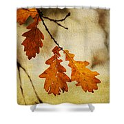 Oak Leaves At Autumn Shower Curtain