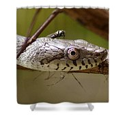 Oak Snake And Fly Shower Curtain