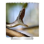 Oak Snake  Shower Curtain