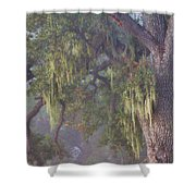 Oak Tree And Spanish Moss In The Mist Shower Curtain
