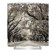 Oak Trees Of Charleston South Carolina In Sepia Shower Curtain