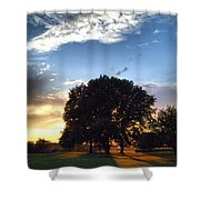 Oak Tree At The Magic Hour Shower Curtain