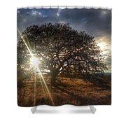 Oak Tree At The Plateau Shower Curtain